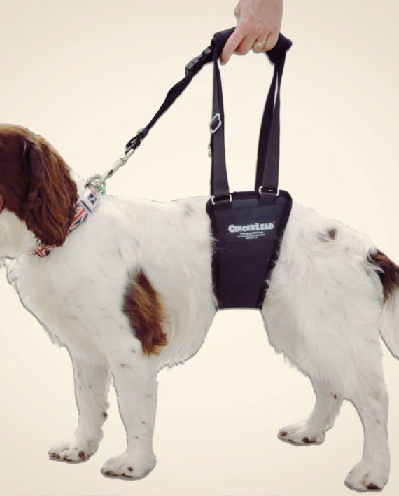 how to put on a dog nose harness