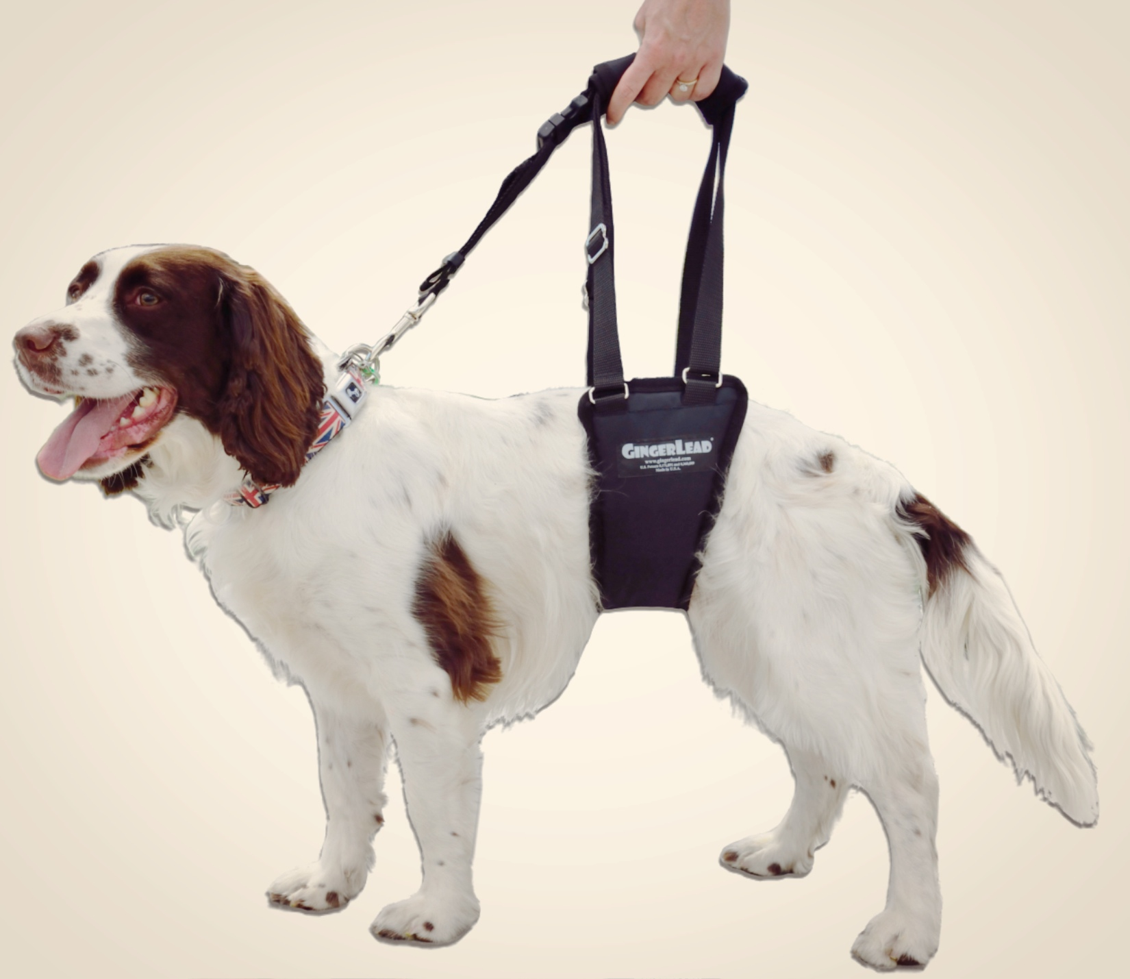 Gingerlead Dog Hind Leg Harness The Nose Stamp