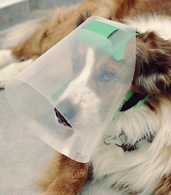Lees hier waarom jouw hond de Novaguard kap veel fijner vindt dan een gewone hondenkap