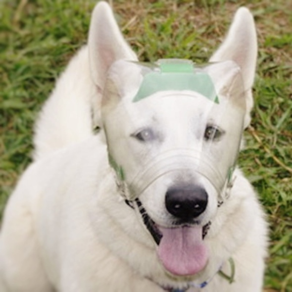 Optivizor Eye Protection For Dogs Cats And Other Pets