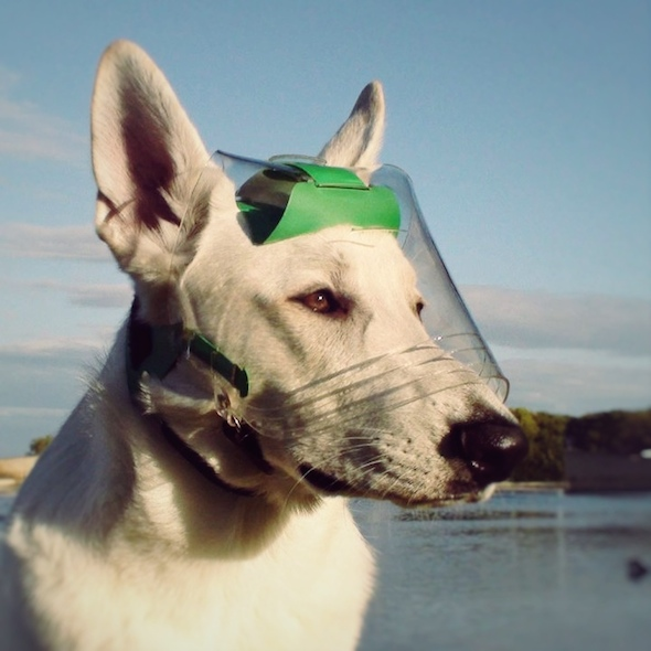 Optivizor Eye Protection For Dogs
