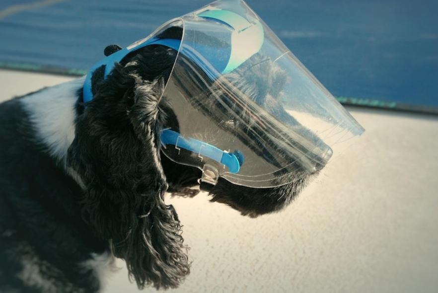 de2d3116cd Optivizor - Eye protection for dogs