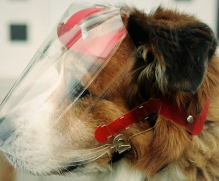 Optivizor Eye Protection For Dogs